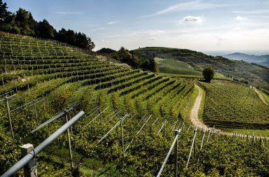 vini tedeschi valpolicella