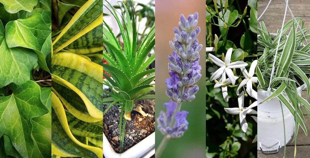 Urban jungle home come arredare la casa con le piante chizzocute - Piante per camera da letto ...