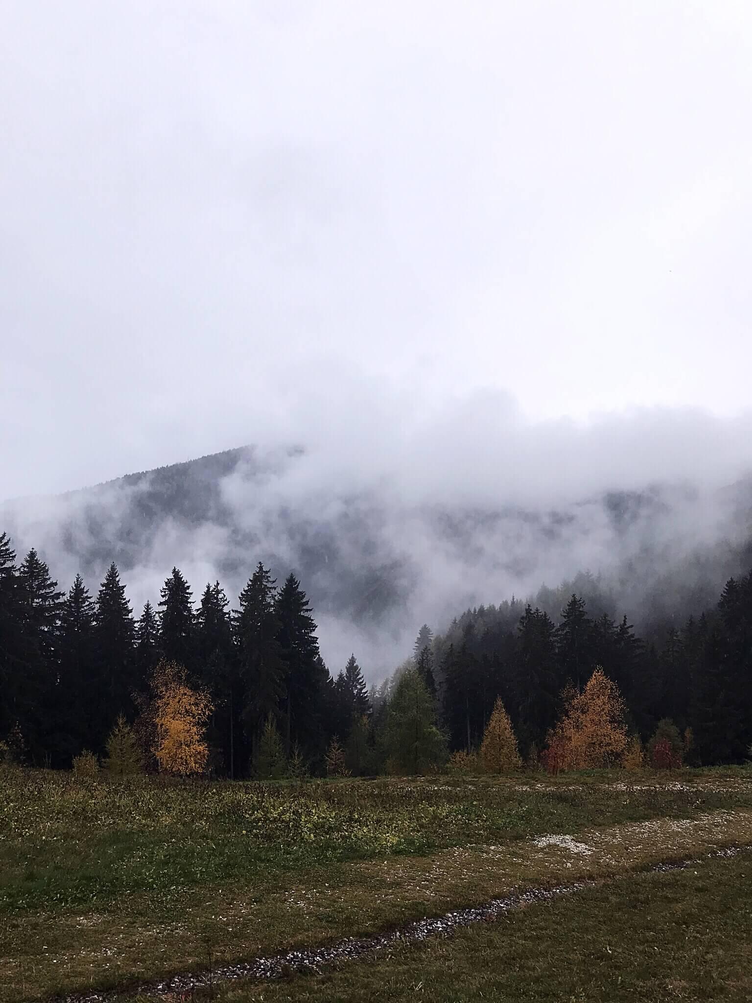 Boschi Sud Tirolo_