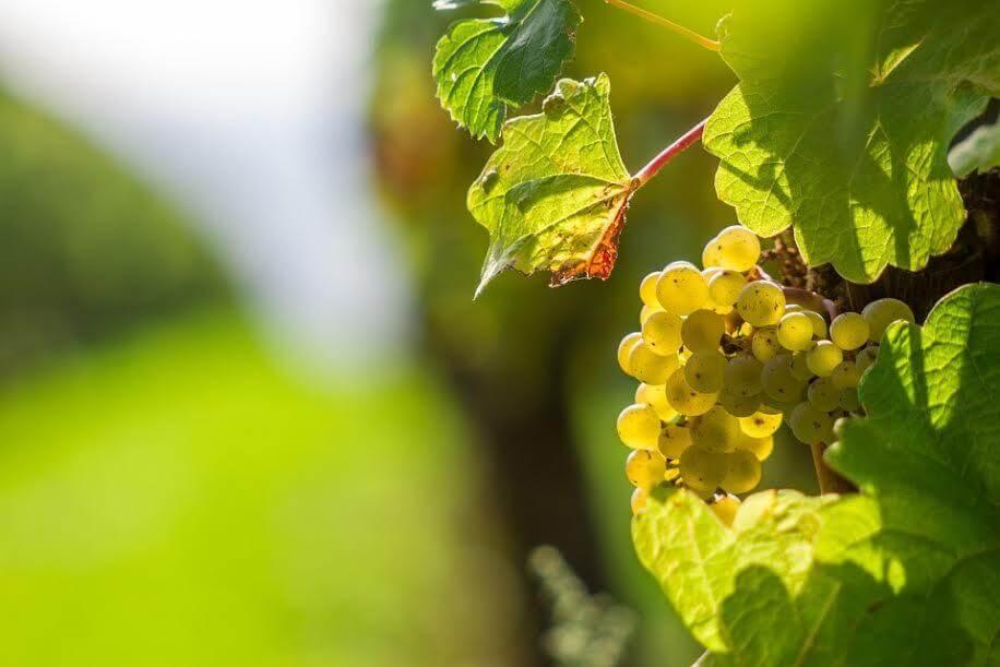 Vino Bianco del Piemonte elenco abbinamenti