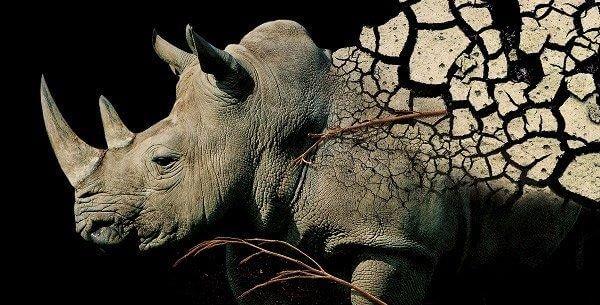 bioparco ZOOM Torino -Rinoceronte
