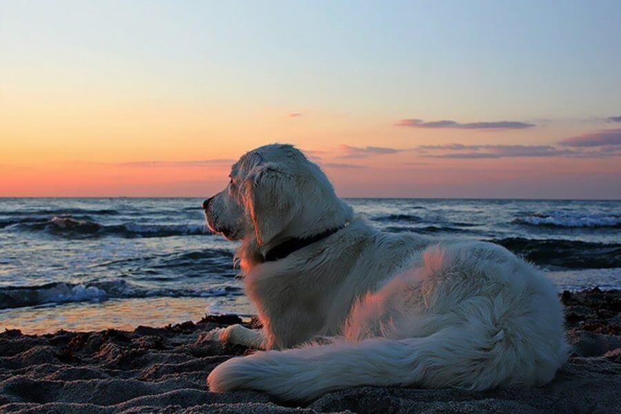 barca a vela con i cani