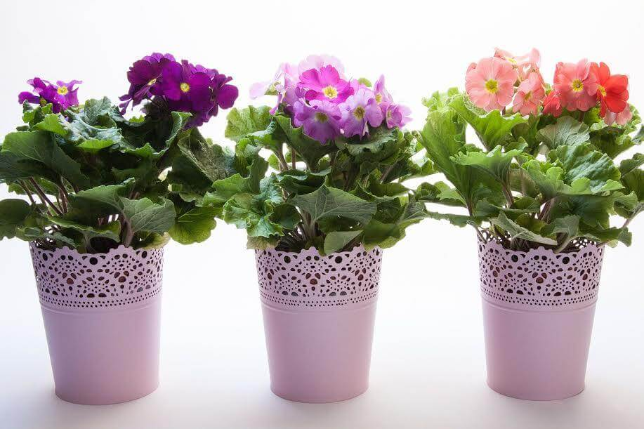 pulizie di primavera e decluttering differenze