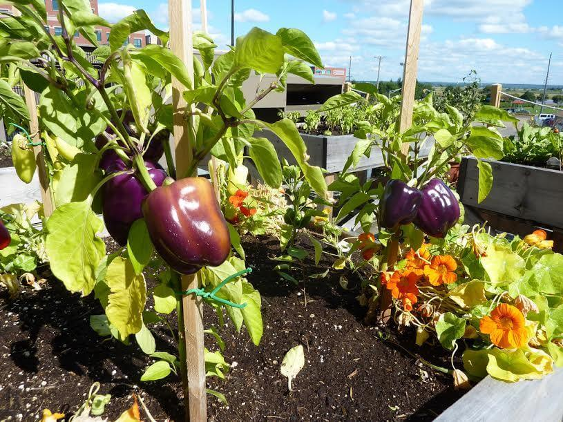 Come, cosa e quando coltivare in vaso? L\'orto sul balcone o sulla ...