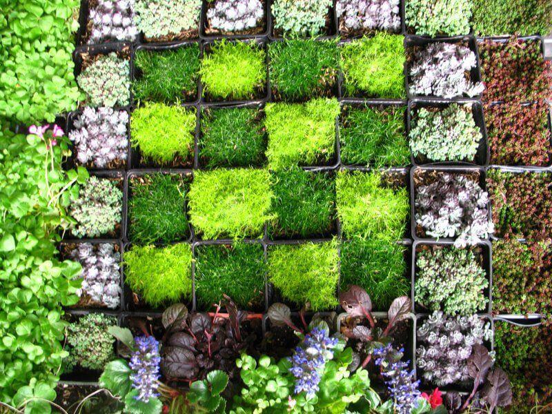 I giardini verticali bellezza e benefici delle pareti for Pareti verdi verticali