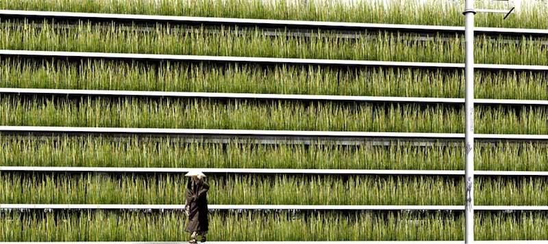 citta-green-mondo