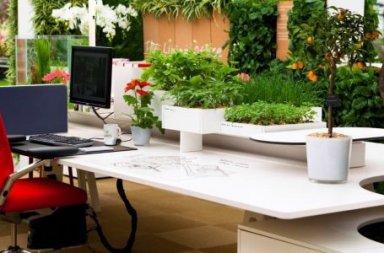 piante_ufficio