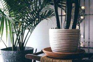 piante depurare l'aria di casa