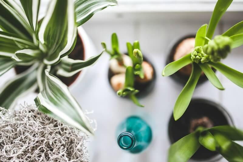 piante depurare aria