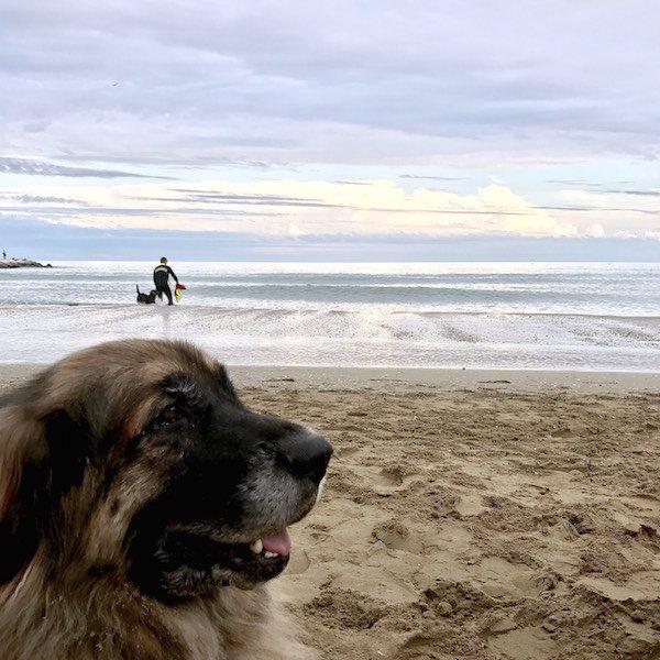 Cani salvataggio