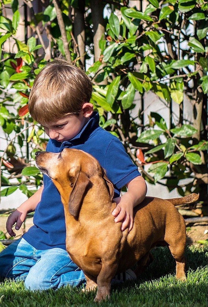 Bassotto cane amorevole