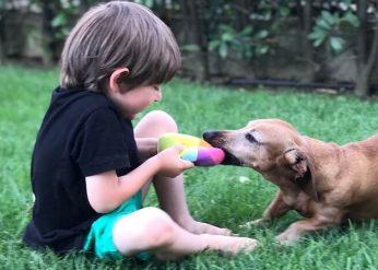 Cucciolo o adulto_ Come scegliere il cane
