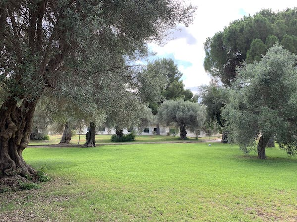 Parco verde sul mare sicilia