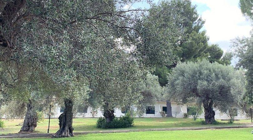 hotel terrasini sul mare sicilia