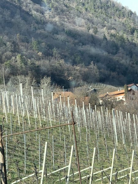 Mele in Alto Adige